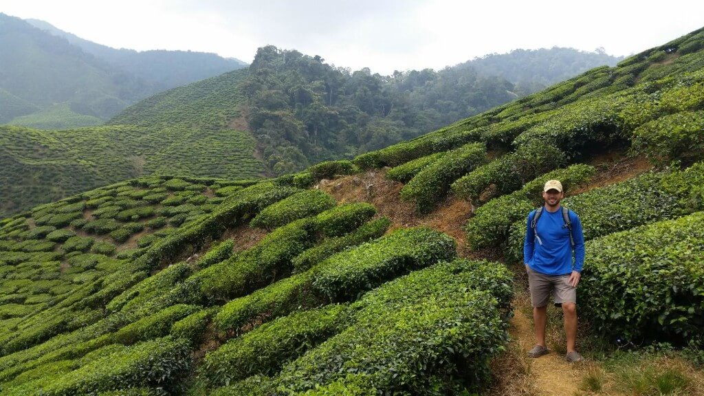 Checking out the Tea Plantations in Cameron Highlands of Myanmar.