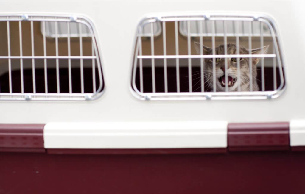 Airline pet carriers are important for pet movers and animal transport